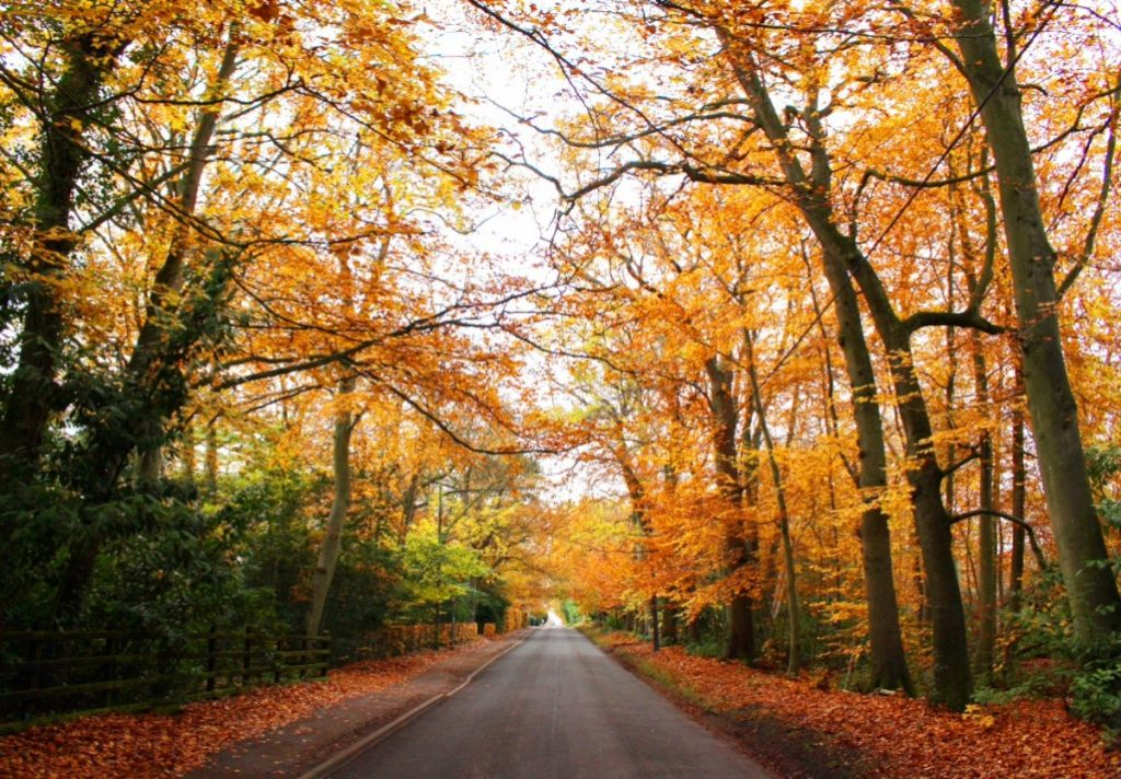 Long road with Autumn Trees